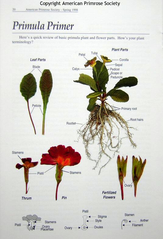 botany lesson